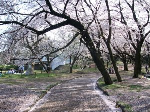 away-from-the-crowds-yoyogi-park