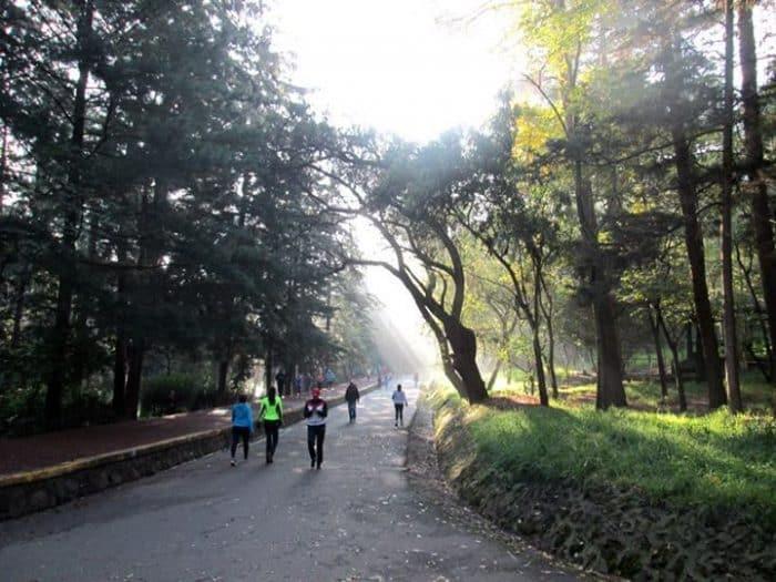 Bosque de Tlalpan - Great Runs