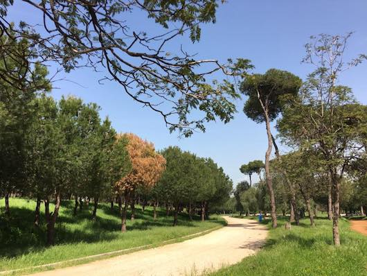 Horsh Beirut (Park) - Great Runs